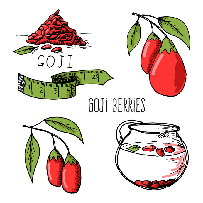 Goji berries sketch