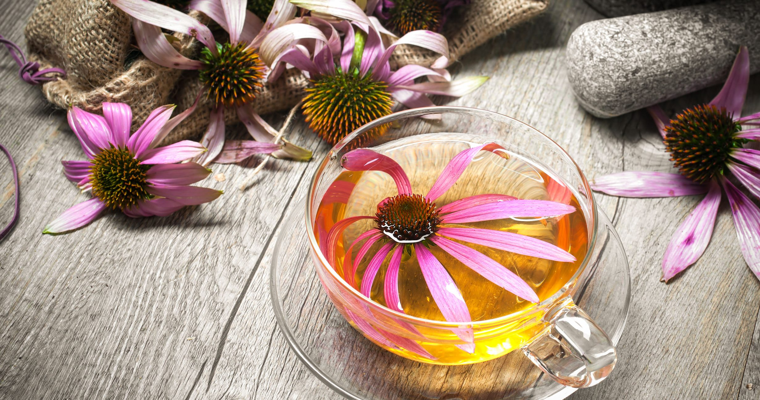 Best Echinacea Supplement 2020: Shopping Guide & Review