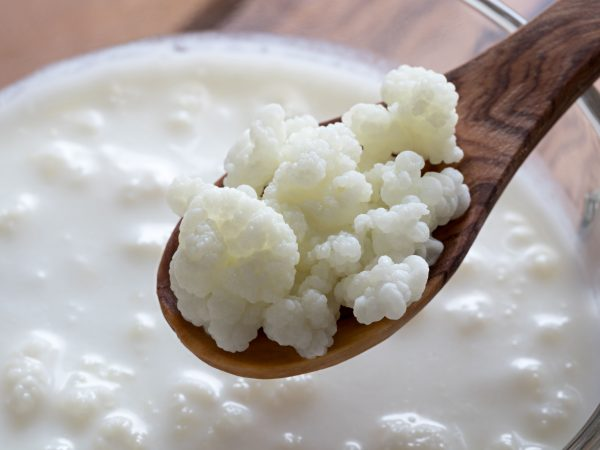83825649 – kefir grains on a wooden spoon above a jar of milk kefir